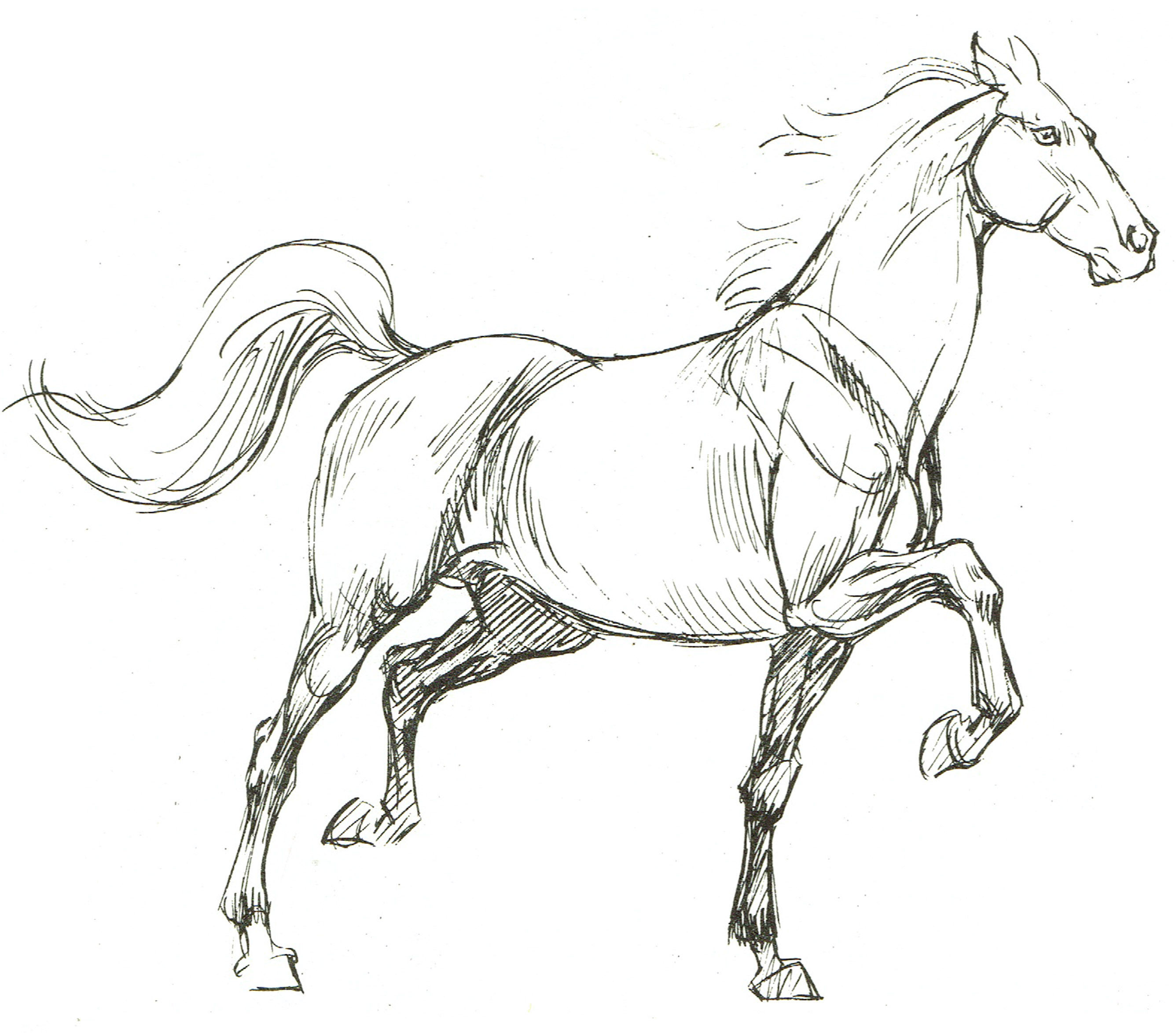 Drawing 2 the next step notes and assignments horse3 ccuart Image collections